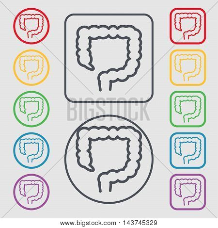 Large Intestine Icon Sign. Symbol On The Round And Square Buttons With Frame. Vector