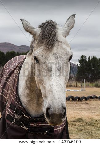 Portrait of white horse face on cold dreary grey day
