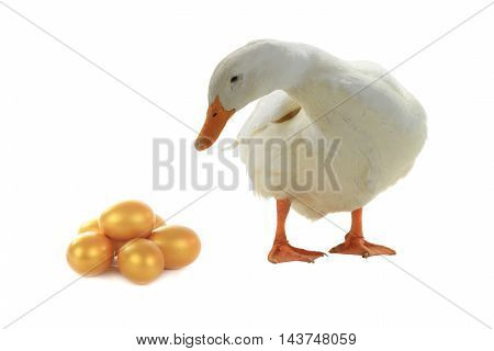 duck and egg on a white background