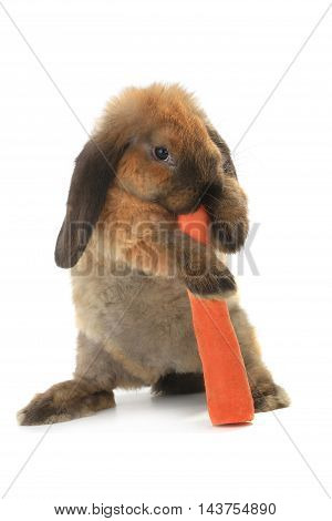 rabbit with a uvula and carrots on a white background
