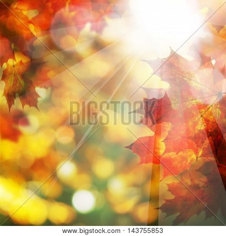 Fall orange Leaves and Sunlight. Autumn Background