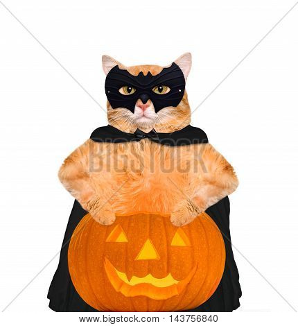 Cat wearing costume for halloween with a pumpkin. Isolated on white background.