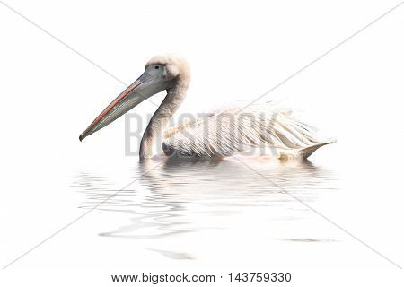 the a  pelican on a white background