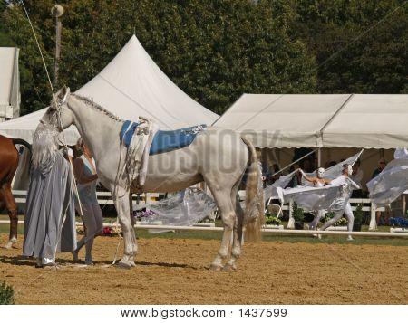 Vaulting Saddle
