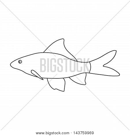 Red Tail Shark fish icon line. Singe aquarium fish icon from the sea, ocean life collection.
