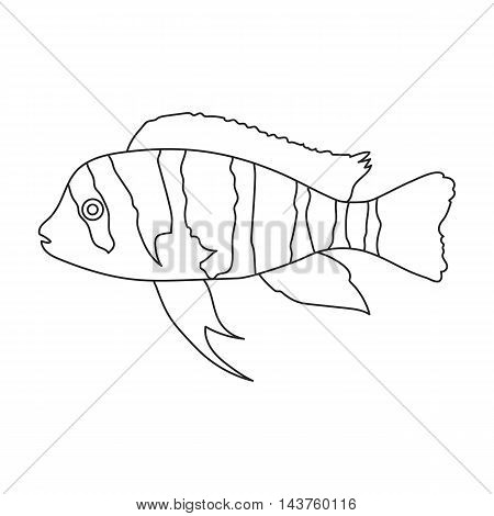 Frontosa Cichlid Cyphotilapia Frontosa fish icon line. Singe aquarium fish icon from the sea, ocean life collection.