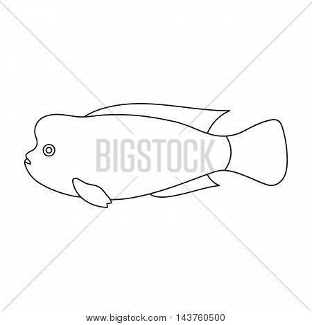 Stearocranus fish icon line. Singe aquarium fish icon from the sea, ocean life collection.