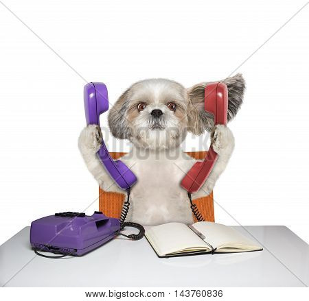 Cute dog is talking over two phones -- isolated on white