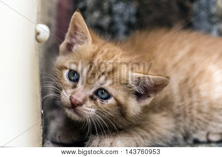small young red cat first experiences closeup