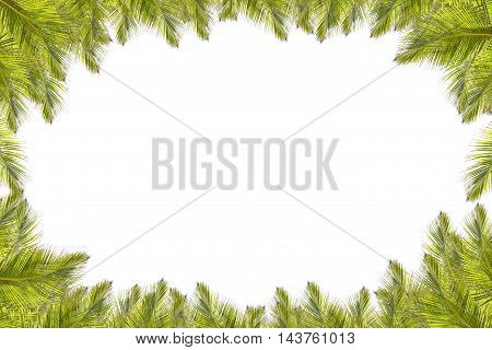 coconut leaves frame on a white background