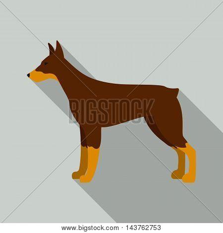 Doberman vector illustration icon in flat design