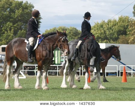 Three Clydesdales