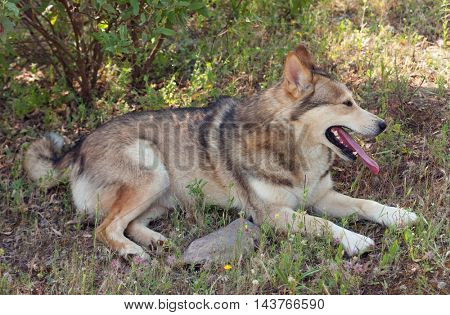 Beautiful dog sitting on the field looking something