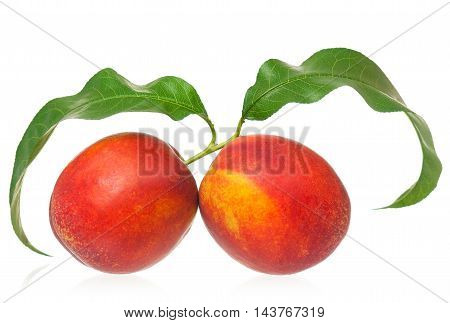 Fresh red nectarines isolated on white background