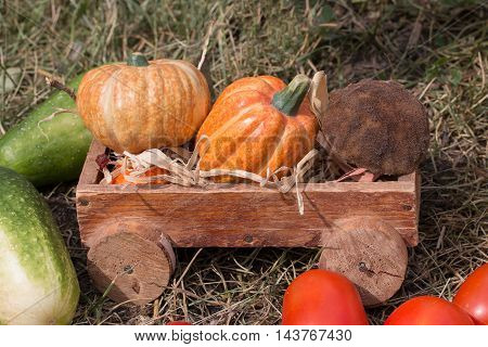 Fresh harvest vegetables lies in a wooden trolley