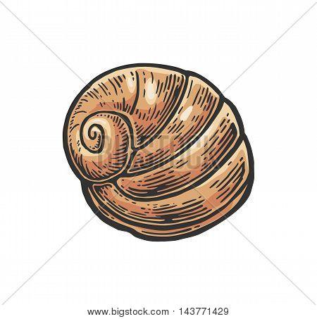 Sea shell nautilus. Color engraving vintage illustration. Isolated on white background.