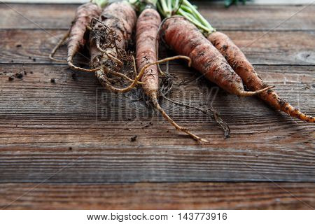 New harvest fresh organic carrots