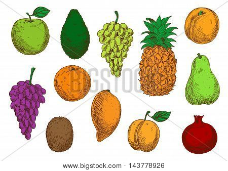 Fresh tropical and exotic fruits. Vector sketch isolated icons of apple, mango, grape, orange, avocado, apricot, pineapple, peach, pear kiwi and pomegranate