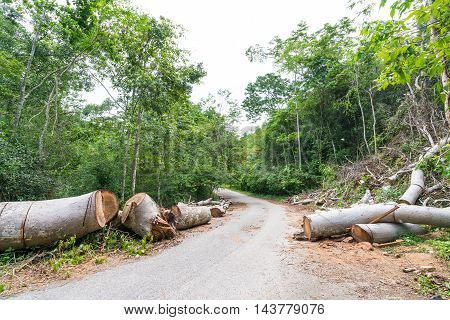 Fallen trees cut to clear path for road through tropical rainforest
