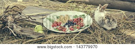 Rabbit With Wild Berries And Green Apples