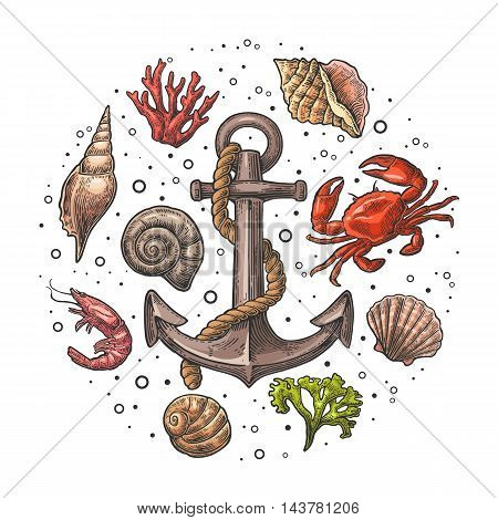 Set sea shell, coral, crab, shrimp and anchor. Vector color engraving vintage illustrations. Isolated on white background. For tattoo, web and label