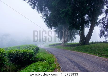 Winding road with tea plantation and fog at Cameron Highlands Malaysia.