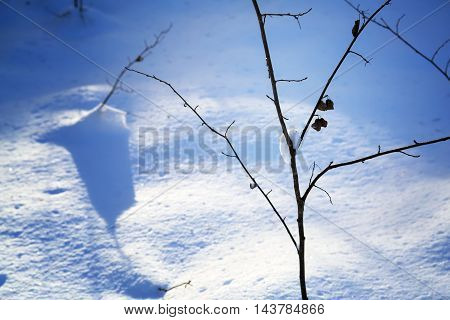 Frozen branch in snow in the winter