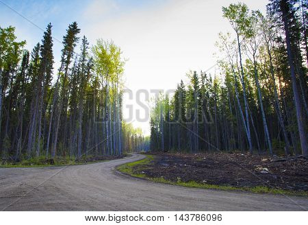 Road through the forest in Saskatchewan Canada in the early morning