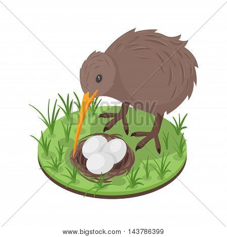 Vector 3d isometric illustration of kiwi bird near the nest with three eggs.