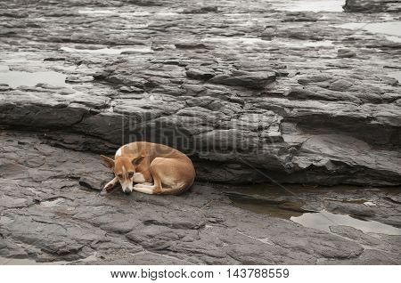 Stray dog seeking refuge on a beach.