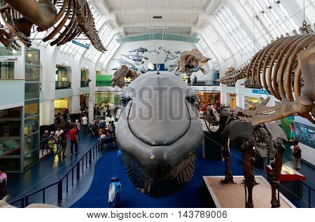 The Large Mammals Hall At The Natural History Museum In London