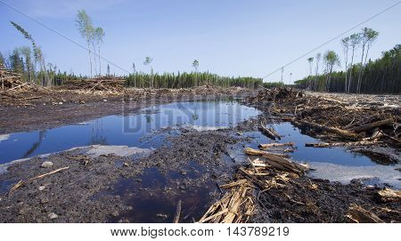 Saskatchewan Canada forest that has been cleared by logging