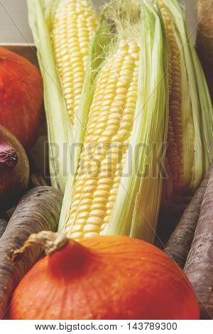 Ripe Yellow Corn And A Pumpkin Colored Carrots In A Box. Autumn