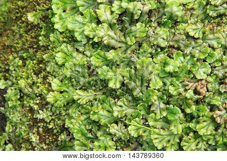 Lichen And Moss Background
