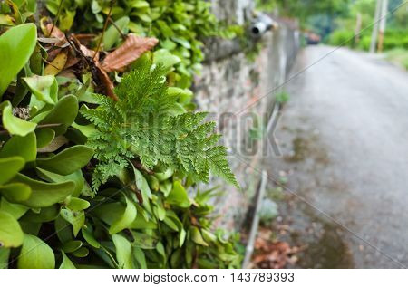 green fern in the city with small path