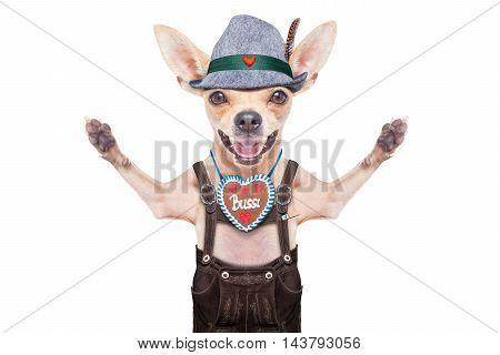 Bavarian Beer Dog