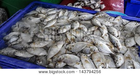 a bunch of small sea fish in the ice box