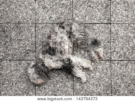 Shaggy grey dog lying stretched out on its side sleeping on mottled paving tiles viewed from the top down