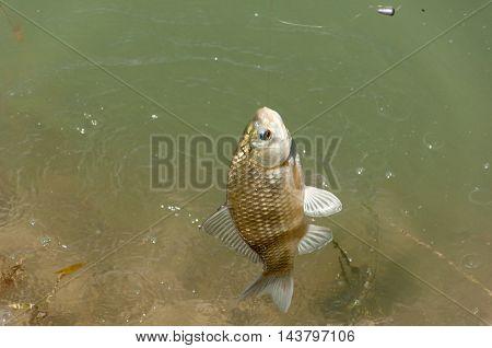 Fish caught on a fishing trip carp