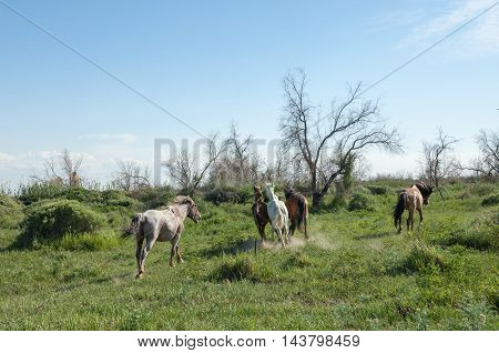 Horses in the steppe nature, animal, steppe, mammal, grass,