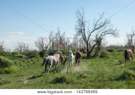 Horses in the steppe wild, land, beautiful,