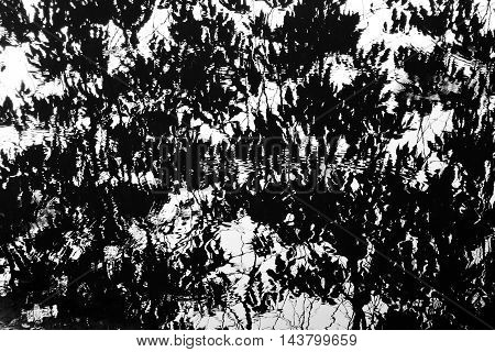 Abstract black and white water reflection of trees