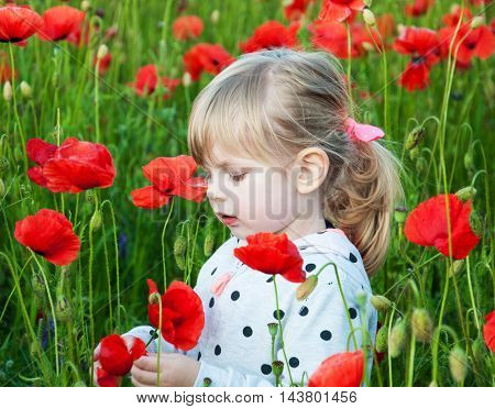 Little child girl in field with red poppy flowers