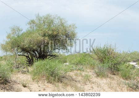 Steppe sand Kazakhstan.