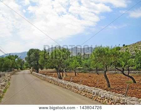 road with stone wall trees and olive grove