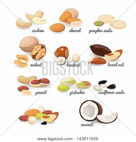 Set of various nuts and seeds, colorful vector flat illustration