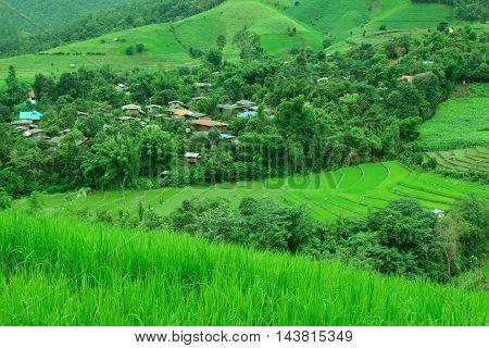 Rice field terraces at Baan Teen Par, Chiangmai, Thailand.