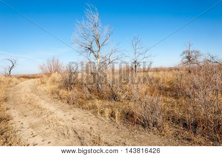 Steppe in the late autumn.  shrubbery, brushwood, boscage, boskage