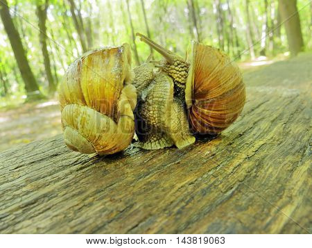 Two snails communicate with each other on the bench