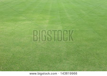 Green grass in golf Fairway Grass field background
